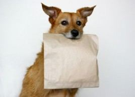 Doggy bag: cap ou pas cap ?