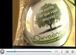 Dépolluez votre intérieur grâce aux plantes vertes