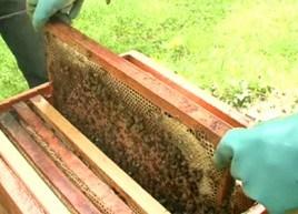 Une ruche sur mon balcon