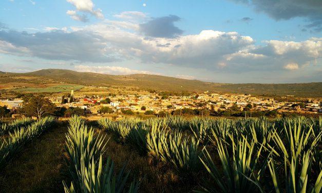 Partir à la découverte de la flore mexicaine