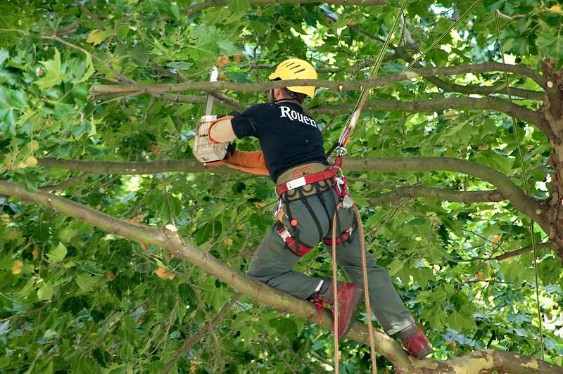 Élagage d'un arbre: pourquoi recourir au service d'un élagueur professionnel?