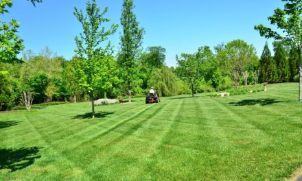 Les méthodes d'entretien à adopter pour une pelouse artificielle