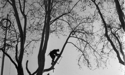 L'élagage des arbres : les principes à connaître