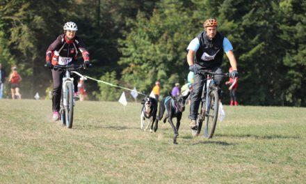 Le Canicross ou comment faire du sport avec votre chien ?