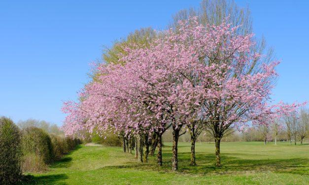 Un guide rapide pour garder vos arbres sains et beaux