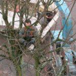 Élagage d'arbres : le guide pour des travaux efficaces et avantageux