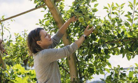 Focus sur les 5 erreurs à éviter pour la taille des arbres fruitiers